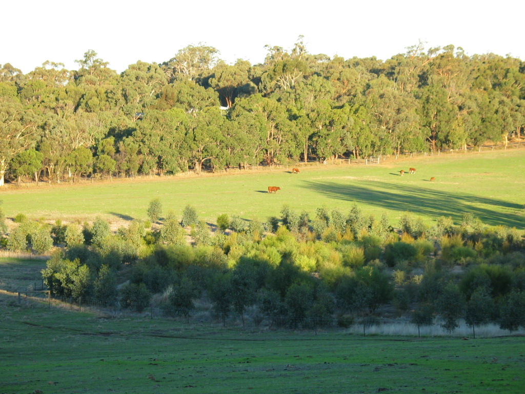 Fenced and revegetated stream, Wooroloo catchment