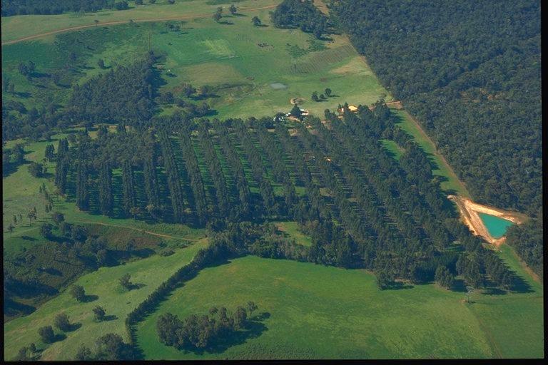 Farm foresty aerial