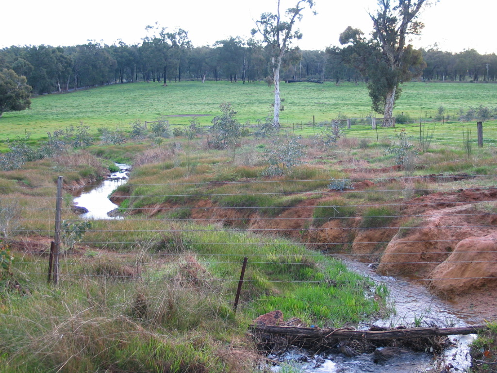 Fencing and revegetation of watercourse
